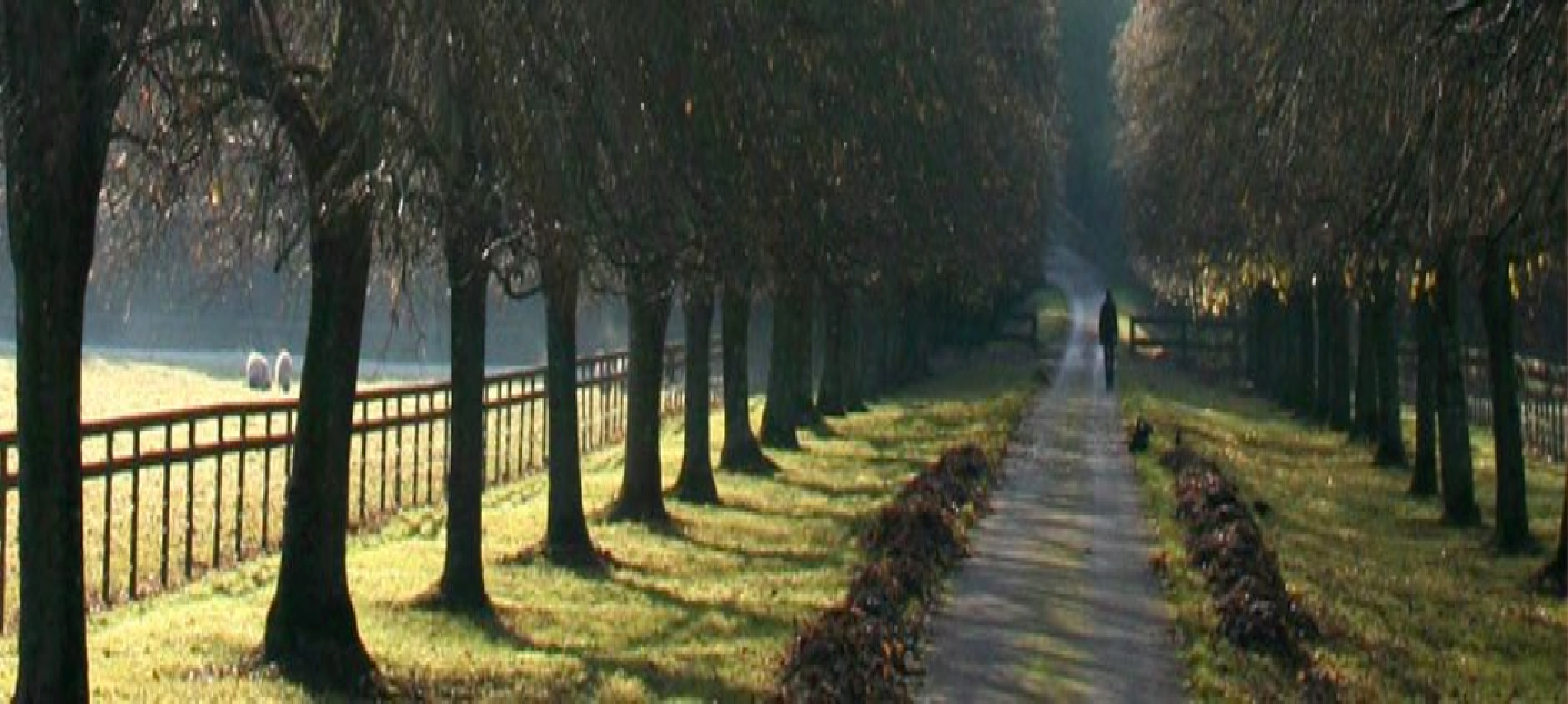tree-lined-country-driveway-fence